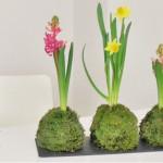 DIY: Kokedamas (Moosbälle) als hübsche Tischdeko