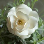 Vorlage Rosenblüten aus Papier DekoKitchen