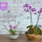 DIY: Orchideen effektvoll dekorieren