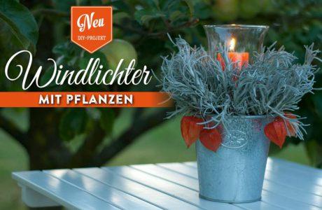 DIY: Windlichter mit Pflanzen Deko-Kitchen