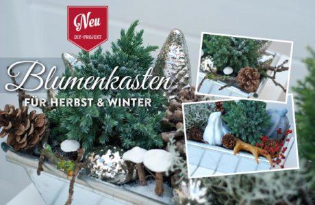 DIY: Blumenkästen für Herbst & Winter dekorieren