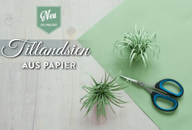 DIY: süße Tillandsien (Air Plants) aus Papier