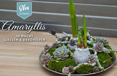 DIY: Amaryllis in Wachs gießen und wunderschön dekorieren Deko-Kitchen