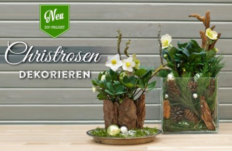 DIY: Christrosen effektvoll in Szene setzen Deko-Kitchen